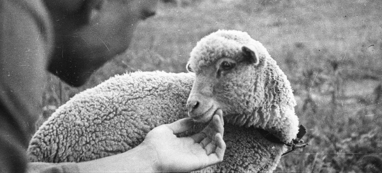 magazine article relating to dolly the particular sheep